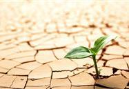 """中科院:新获得一种高效的""""抗旱激素""""类似物 有助于提高植物抗旱能力"""